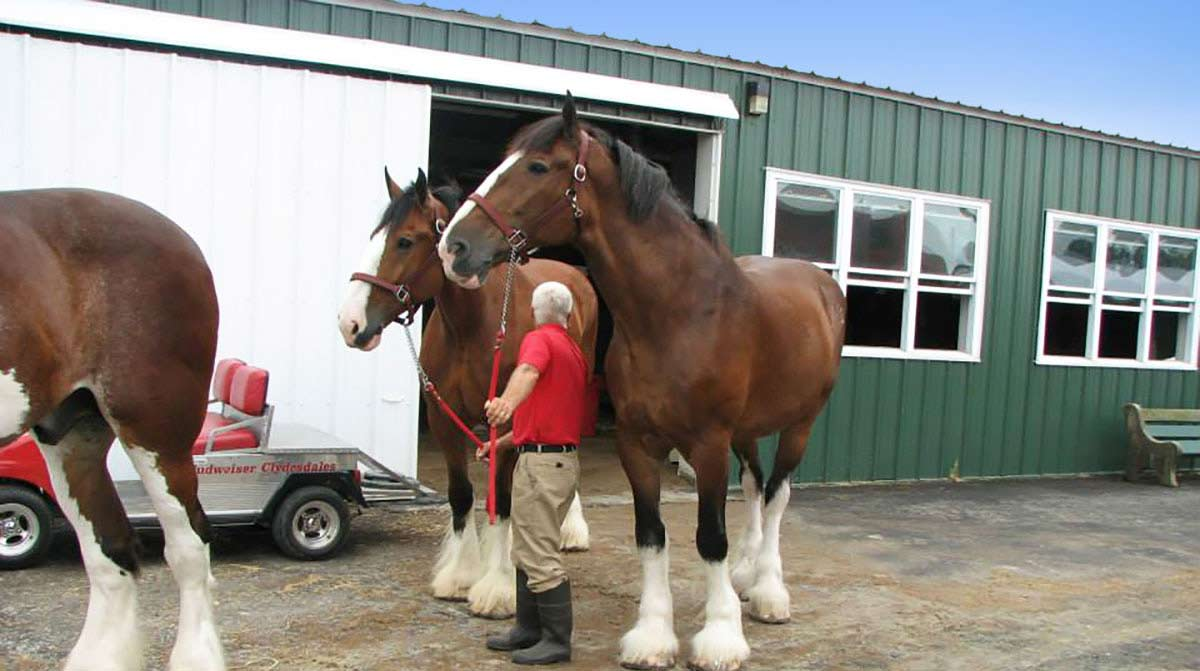 equestrian_building_pa1